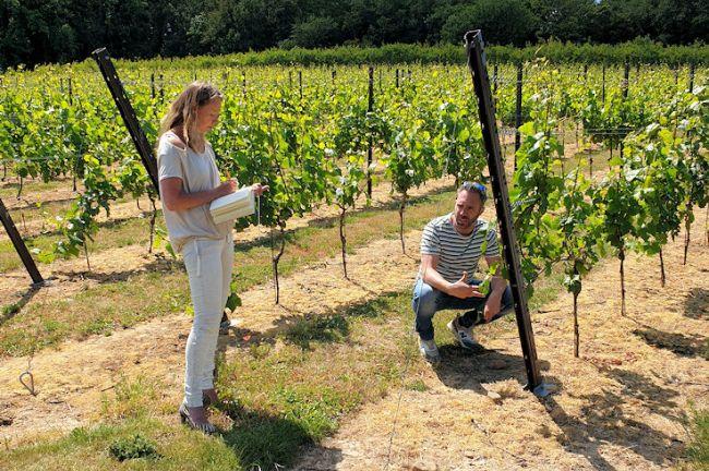 Wijntoerisme in Nederland?