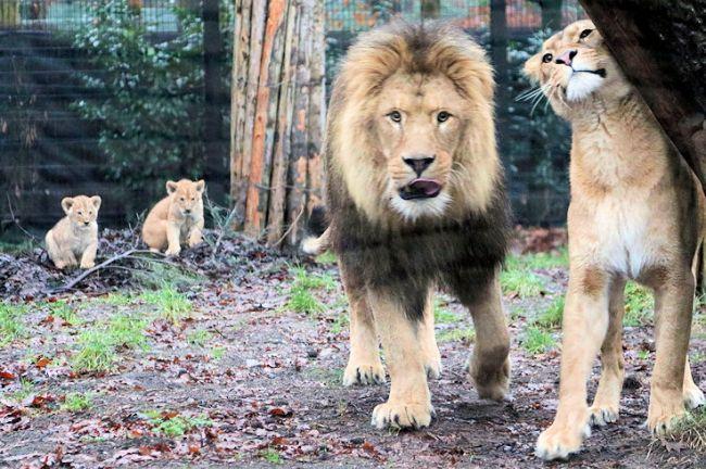 Kabinet komt noodlijdende dierentuinen tegemoet