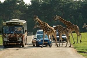 Safaripark_Beeksebergen_bus_auto_giraffen_klein