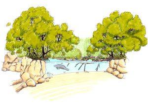 burgers mangrove