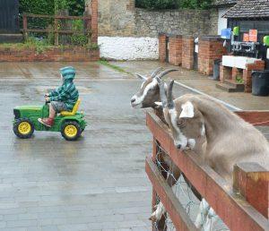 farm attraction