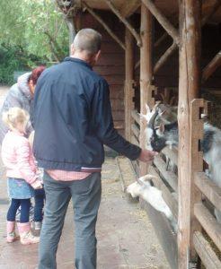 Geitjes eten uit je hand (nl). Dit is op een UK farm-attractie ondenkbaar.
