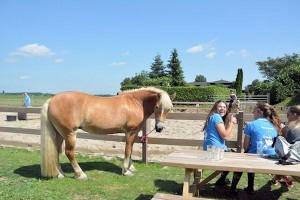 Paardrijden op 't Eiland van Murik